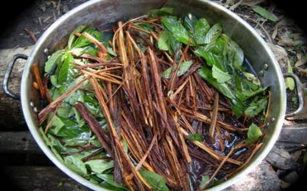 Ayahuasca Adventures - How This Ancient Medicine Changed My Life