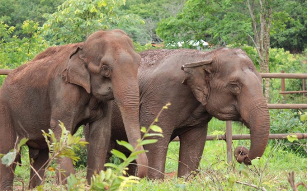 Latin America's First Elephant Sanctuary