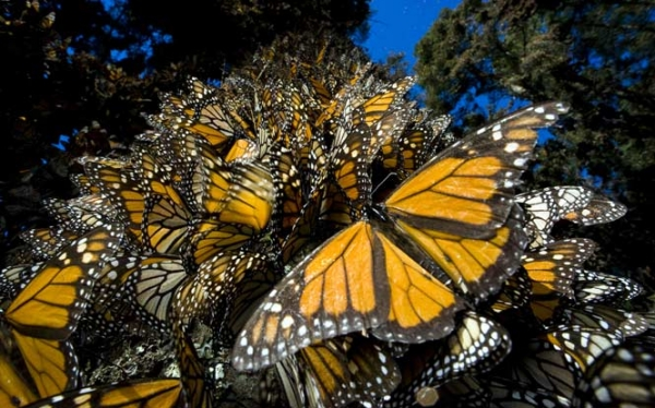 Experience Monarch Butterflies in Mexico
