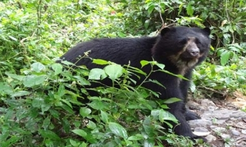 Andean Bear Carers