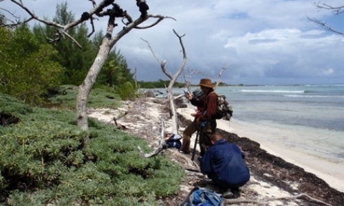 Conservation Research of Endangered Mangrove