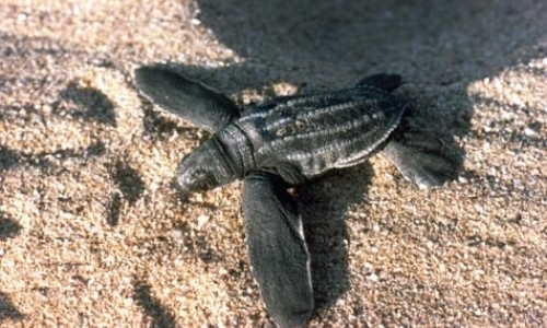Marine Turtle Conservation Program