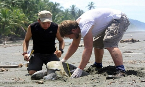 Research Assistants for Turtle Program