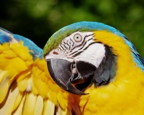 The Magic of the Macaw