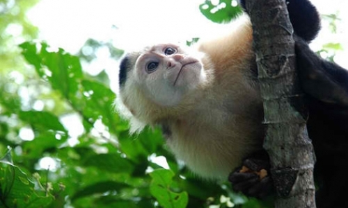 Field Assistants for Monkey Project