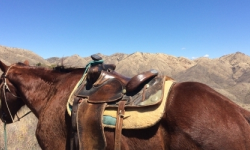 Hiking Guide, Host and Ranch Hand